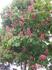 Карловы Вары,цветущие каштаны
