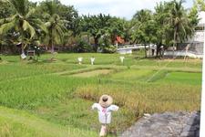 Музей риса