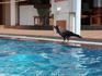 У бассейна отеля.