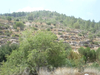 Один день на Земле Обетованной. Часть 3. Иерусалимский лес и Мертвое море.