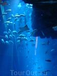 просто.... аквариум.