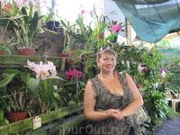 Зато там располагается большой сад орхидей, многие из них цвели и благоухали