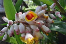 парк Авентура: цветы необыкновенной красоты