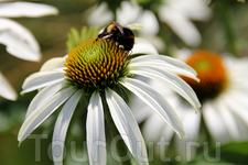 Пчёлка :))
