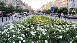 Розы на Вацлавской площади