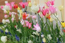 тюльпаны в крепости Акерхус
