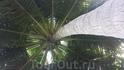 пальма вид снизу