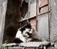 В конце фотоотчета я решила показать фотографии многочисленных стамбульских котов