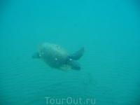 а это фото с желтой субмарины, той у которой прозрачное дно