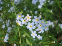 флора Карелии