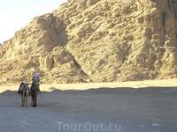 верблюдики в пустныне