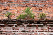 Деревья и трава растут прямо на стенах церкви