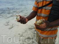 Прогулка на риф