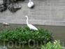 Птица из Рио