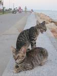 Котов не сосчитать