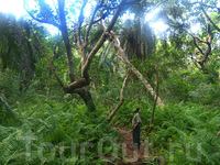 лес Джозани