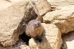 Рикки-Тикки-Тави, а проще говоря, мангуст :) Зоопарк Фригиа - Friguia Park - между Сусом и Хаммаметом