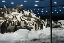 Пингвинарий