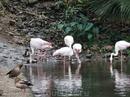 Помахали розовым фламинго