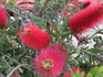 Неизвестной породы...цветы...