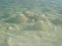 Мёртвое море. Сказочные пейзажи из соли, напоминающие нашу зимнюю сказку из льда.