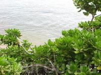 Какие-то мангровые заросли чтоли