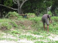 На сенокосе, заготавливает траву для коров на зиму