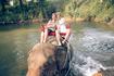 Мы и купание слонихи Пут