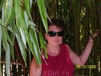 Бамбуковая аллея.Никитский ботанический сад