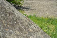 Около Уплисцихе мы присели на пикник. Было время и поохотиться с фотоаппаратом на ящериц.
