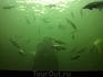 Кажется, что рыбы любят позировать... Каждый день летом в 15.00 можно посмотреть, как водолаз кормит рыб, обитающих в аквариуме.