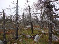 Сказочный лес Воттоваары.