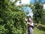 Яблок в ботаническом саду-море...