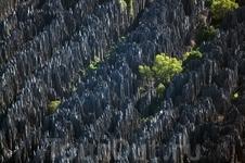 Заповедный каменный лес Цинжи-де-Бемараха (Tsingy de Bemaraha) на западном побережье Мадагаскара. Внесён в список объектов Всемирного наследия ЮНЕСКО