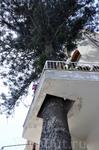 Что первичнее? Балкон или дерево?
