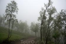 """""""Психоделический"""" лес в горах Кофьорда."""