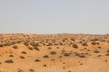 по дороге в Дубай