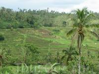 Рисовые террасы, центр Бали