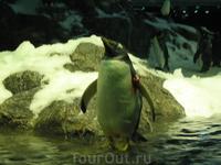 Лоро-парк - пингвинарий ))))