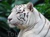 Фотография Сингапурский Зоопарк