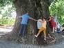 900-летний платан в Телави обняло 11 туристов!