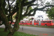 Куритиба. Красные городские автобусы