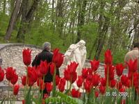 Пушкин и тюльпаны