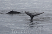 Рядом с судном часто проплывают киты