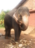 индийский слоник