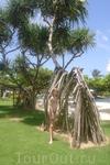 Бали. На территории соседнего отеля Хилтон