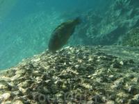Неизвестная автору рыбка в Манго Бэй, остров Ко Тао.