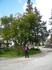 лесники везде найдут деревья