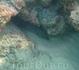 Мурена, в подводных камнях пляжа Най Тон.