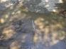 Серая цапля в маленькой речушке, впадающей в море